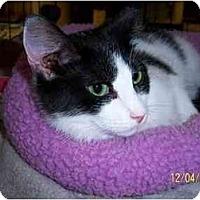 Adopt A Pet :: Maddie (DS) - Little Falls, NJ