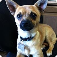 Adopt A Pet :: Leo - Goleta, CA