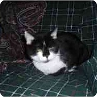 Adopt A Pet :: Uni - Hamburg, NY