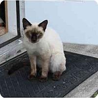Adopt A Pet :: Bandit - Fort Lauderdale, FL