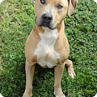 Adopt A Pet :: Thomas - Reisterstown, MD