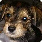 Adopt A Pet :: Elvis Presley
