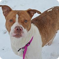 Adopt A Pet :: Meme(foster care) - Philadelphia, PA