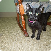 Adopt A Pet :: Tia - Medina, OH