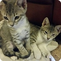 Adopt A Pet :: Leo and Marlee - Chandler, AZ