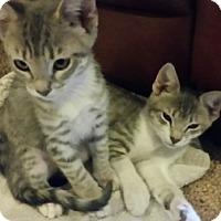 Adopt A Pet :: Leo and Marlee - Chandler, AZ