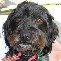 Adopt A Pet :: Mimi - Salem, OR
