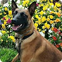 Adopt A Pet :: Keeley - Greeneville, TN