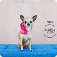 Adopt A Pet :: Nova - Shawnee Mission, KS