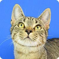 Adopt A Pet :: Knox - Carencro, LA