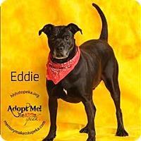 Adopt A Pet :: Eddie - Topeka, KS
