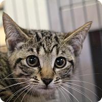 Adopt A Pet :: Ricki - Sarasota, FL
