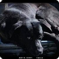 Adopt A Pet :: Buck - Aurora, CO