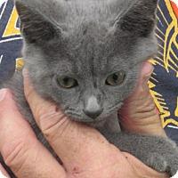 Adopt A Pet :: Gary - Germantown, MD