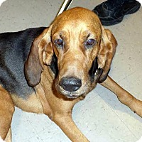 Adopt A Pet :: Preacher - Fayetteville, AR