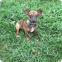 Adopt A Pet :: Mark - New Oxford, PA