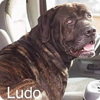 Adopt A Pet :: Ludo - Ringwood, NJ