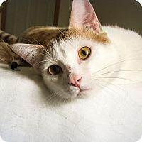 Adopt A Pet :: Elliot (lovable & playful) - Roseville, MN