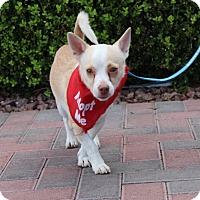 Adopt A Pet :: PEPPY - Las Vegas, NV