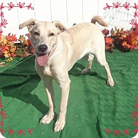 Adopt A Pet :: UTLEY - Marietta, GA