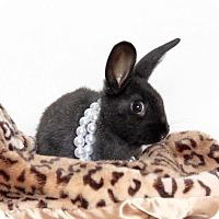 Adopt A Pet :: Ava - Livermore, CA