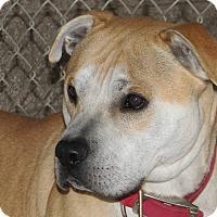 Adopt A Pet :: Buch - Ruidoso, NM