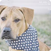 Adopt A Pet :: Cash - San Leon, TX
