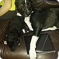 Adopt A Pet :: COURTESY LISTING: Barnaby - San Diego, CA