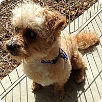 Adopt A Pet :: Humpfrey - Long Beach, CA