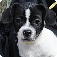 Adopt A Pet :: Ricardo - Gilbert, AZ