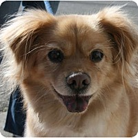 Adopt A Pet :: Ricky - Canoga Park, CA