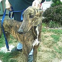 Adopt A Pet :: Angelo - Florence, KY