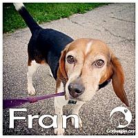 Adopt A Pet :: Fran - Novi, MI