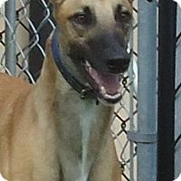 Adopt A Pet :: Kay Fly Delta - Longwood, FL