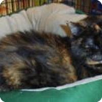 Adopt A Pet :: Katrina - Bear, DE