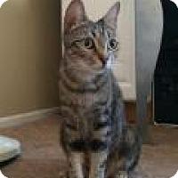 Adopt A Pet :: Lily - Mission Viejo, CA
