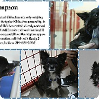 Adopt A Pet :: Sampson - Rockwall, TX