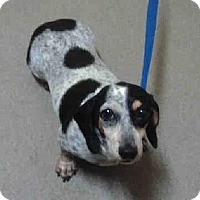 Adopt A Pet :: Dolly - Wheatland, WY