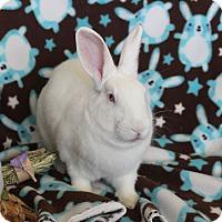 Adopt A Pet :: Marge - Watauga, TX