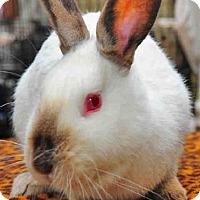 Adopt A Pet :: ALICE - Louisville, KY