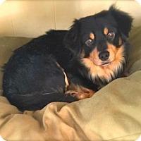 Adopt A Pet :: Pepe - Princeton, KY