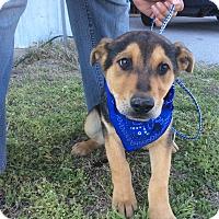 Adopt A Pet :: Bill (HAS BEEN ADOPTED) - Buffalo, NY
