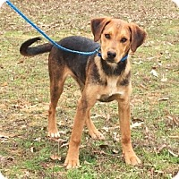 Adopt A Pet :: Benson- adorable, happy fellow - Chicago, IL