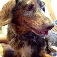 Adopt A Pet :: Napoleon - West Allis, WI