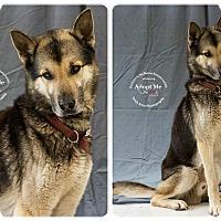 Adopt A Pet :: Echo - Louisville, KY