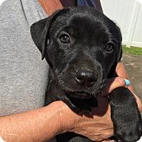 Adopt A Pet :: Miles Miller - Glastonbury, CT