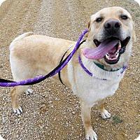 Adopt A Pet :: Gus - Siren, WI
