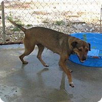 Adopt A Pet :: Eadie - Groton, MA