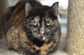 Domestic Shorthair Cat for adoption in Atlanta, Georgia - Linda Mae 150210