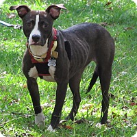 Pit Bull Terrier Mix Dog for adoption in Burgaw, North Carolina - Shannon